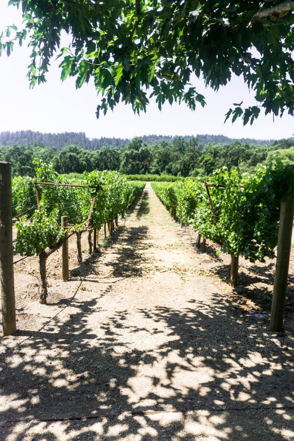 Napa valley travel guide and itinerary